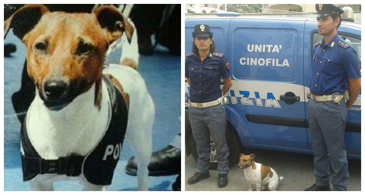 Η Ιταλική Μαφία επικήρυξε αστυνομικό σκύλο(!) με 5.000€
