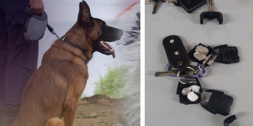 Αλάνθαστη η όσφρηση του σκύλου της Δίωξης που βρήκε ναρκωτικά μέσα σε… κλειδιά!
