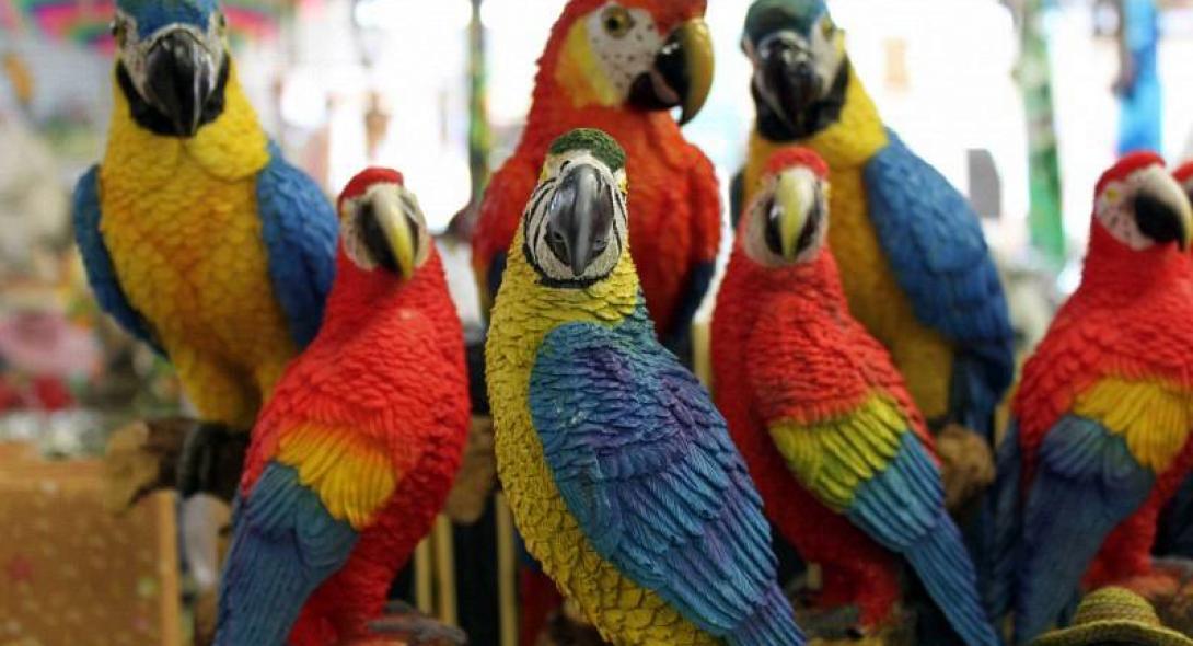 Στο εδώλιο 63χρονος για 400 παπαγάλους και 5 κροκόδειλους!