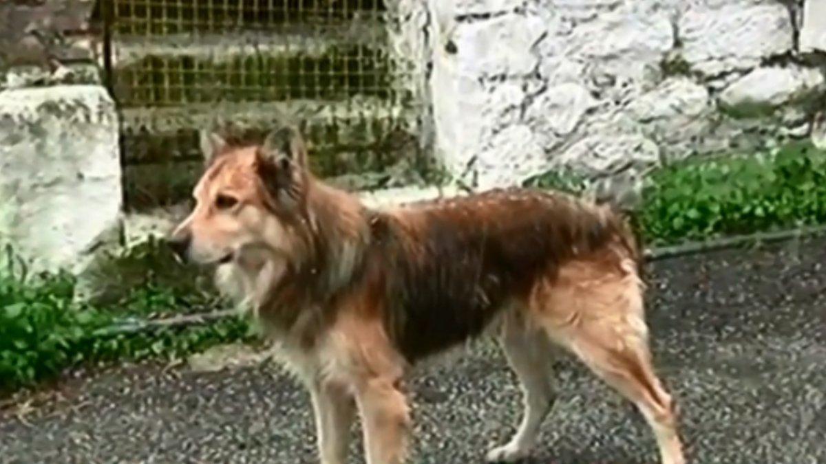 """Έγκλημα στην Κέρκυρα: Σαν άλλος """"Χάτσικο"""" υπέδειξε ο σκύλος της 29χρονης το σημείο που ήταν θαμμένη"""