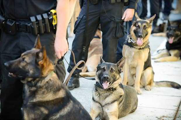 Σκύλος του Λιμενικού εντόπισε 25χρονο με ναρκωτικά στη Μύκονο