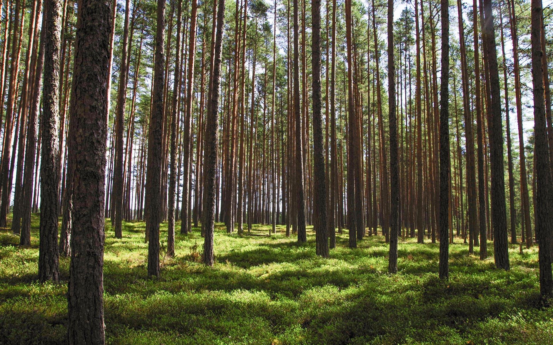 Πρέπει να φυτέψουν δέκα δέντρα για να πάρουν… απολυτήριο!