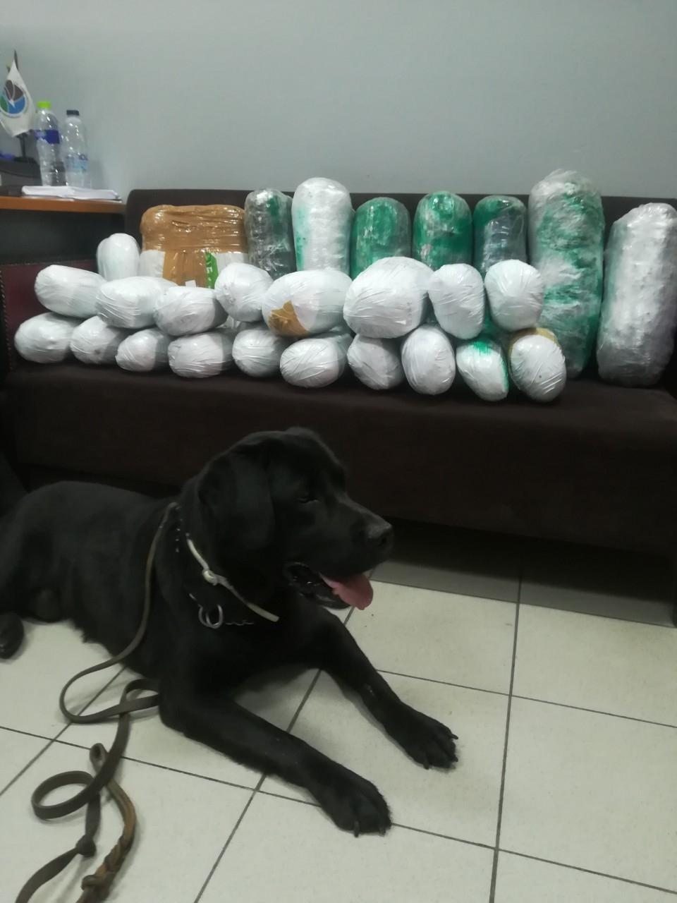 Περισσότερα από 22 κιλά κάνναβης κρυμμένα σε κοντέινερ εντοπίστηκαν στη Θεσσαλονίκη με τη συνδρομή αστυνομικού σκύλου