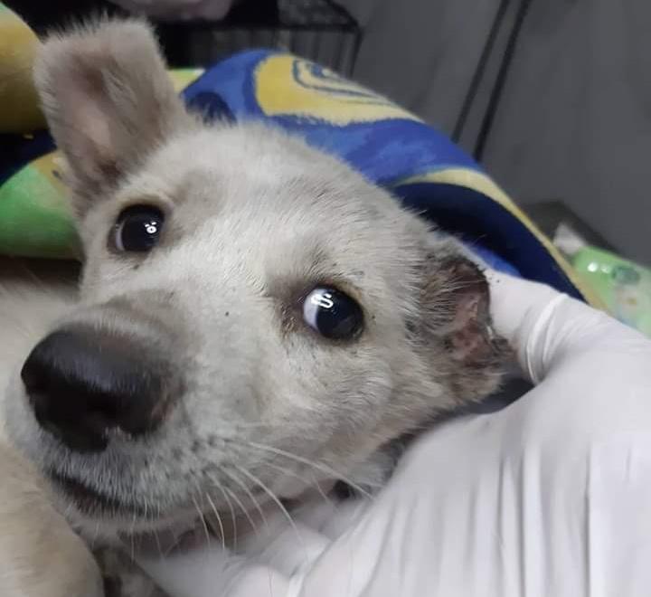 SOS για την κακοποίηση ζώων – Ο Σύλλογος Χανίων κατήγγειλε νέο περιστατικό με… κρεμασμένα σκυλιά