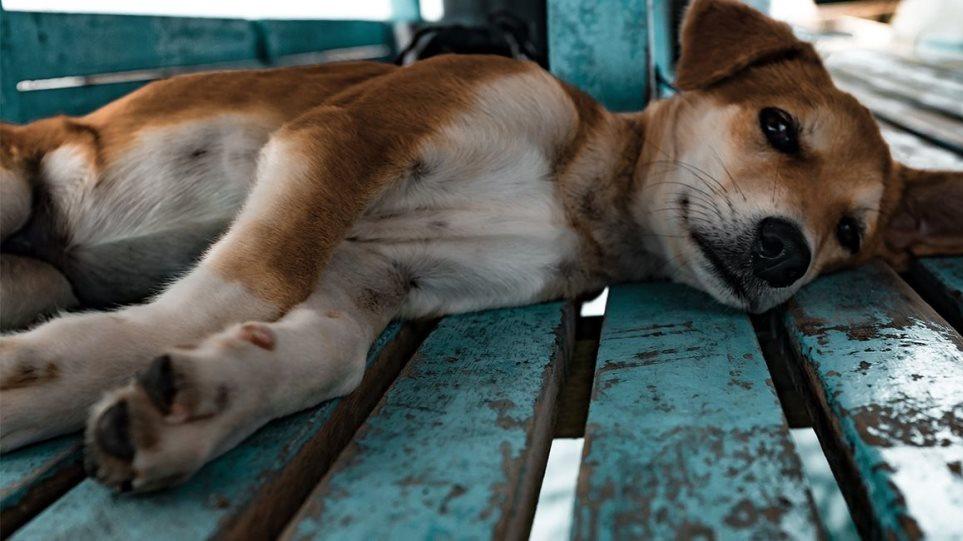 Φρίκη! Το Σκλήθρο Φλώρινας γέμισε με πτώματα δηλητηριασμένων σκύλων