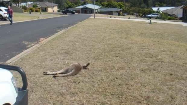 Γλίτωσε την φυλάκιση Αυστραλός που κατηγορείται ότι σκότωσε εκ προθέσεως τουλάχιστον 20 καγκουρό