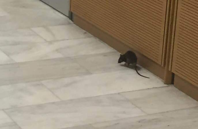 Οι… βόλτες του ποντικού στο Εφετείο (Φωτογραφίες)