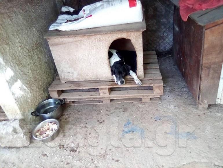 Δίωξη σε εισαγγελέα για κακοποίηση σκύλου κατά συρροή