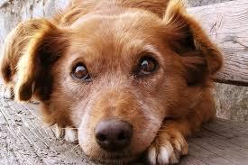 Βαρβαρότητα στη Nίκαια: Μαχαιριές σε αδέσποτο σκύλο – Στον εισαγγελέα οι δράστες