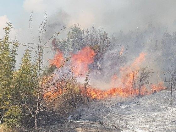 Μεγάλη φωτιά στον Έβρο – Επιχειρούν ισχυρές δυνάμεις της Πυροσβεστικής – ΒΙΝΤΕΟ
