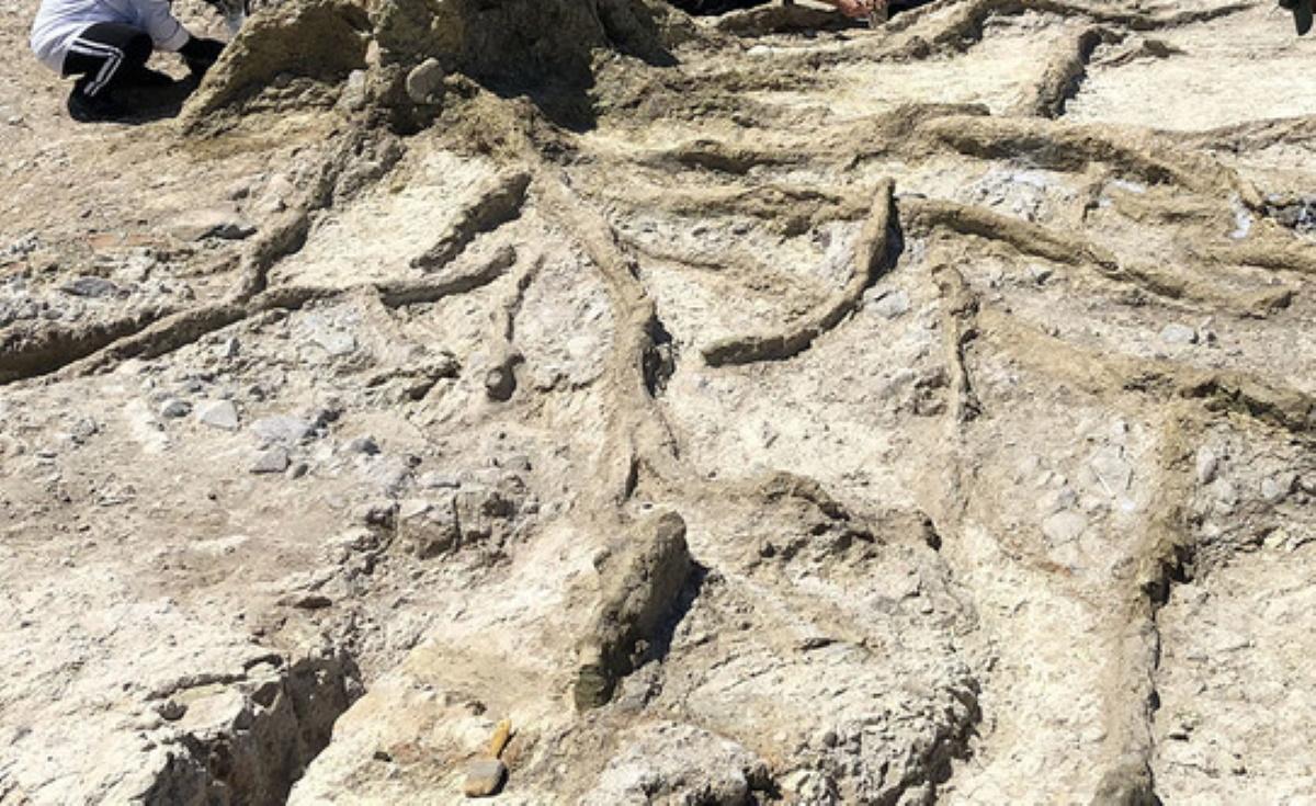 Λέσβος: Βρέθηκαν 14 απολιθωμένα δέντρα που δείχνουν έκρηξη ηφαιστείων (ΦΩΤΟ)