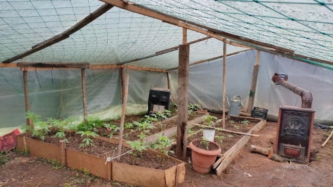 Θεσσαλονίκη: Μετέτρεψε τη στάνη σε θερμοκήπιο για δενδρύλλια κάνναβης