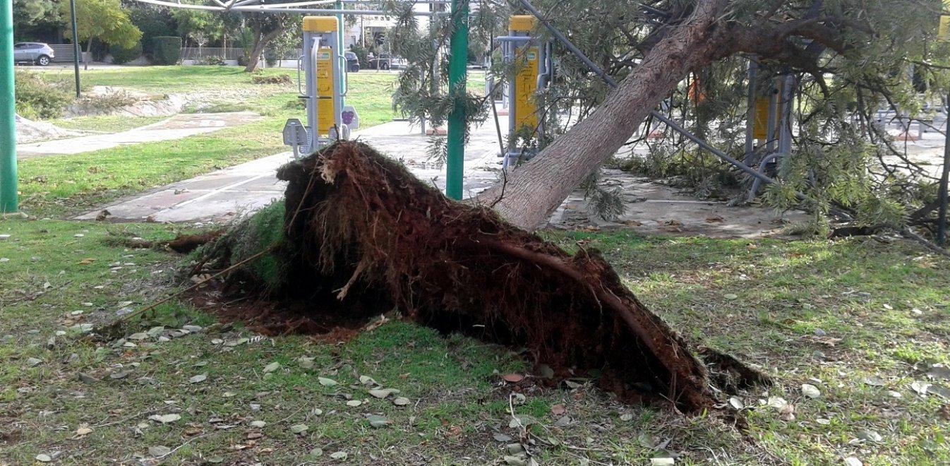Εφετείο: Αποζημίωση πάνω από 164.000 ευρώ για τη μη κοπή δέντρων από δήμους – Η μη λήψη των αναγκαίων μέτρων οδήγησε σε θάνατο 57χρονο