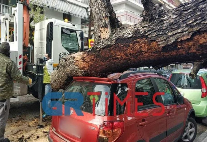 Απίστευτες εικόνες στη Θεσσαλονίκη: Δέντρο σε προαύλιο σχολείου καταπλάκωσε αυτοκίνητα – ΒΙΝΤΕΟ – ΦΩΤΟ