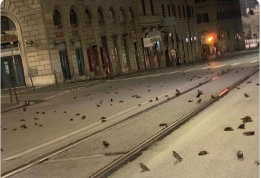 Ρώμη: Εκατοντάδες νεκρά περιστέρια από τα βεγγαλικά της πρωτοχρονιάς /ΒΙΝΤΕΟ