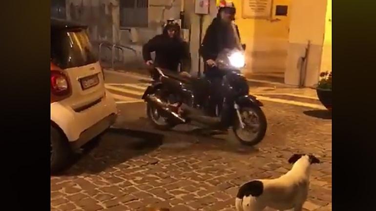 Μύκονος : Της επιτέθηκαν σκυλιά … και την συνέλαβαν