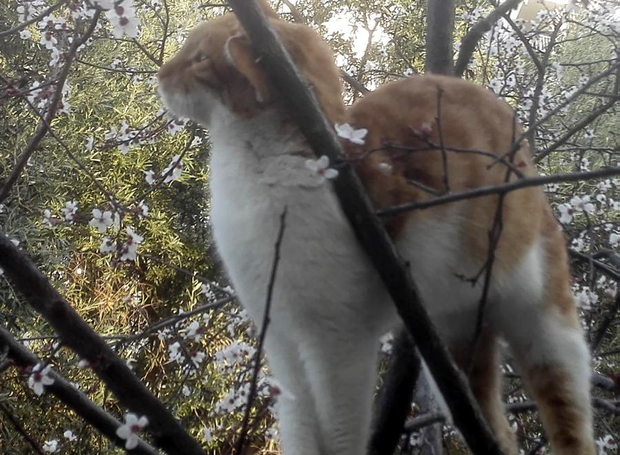 Ιστορική απόφαση: Στη φυλακή 23χρονος που έσφαξε γάτα στην Πάτρα