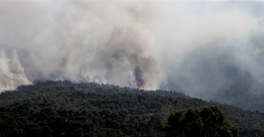 Πυρκαγιά στα Μέγαρα – Σε δασική περιοχή κοντά στο Πεδίο Βολής: Άμεση κινητοποίηση της Πυροσβεστικής