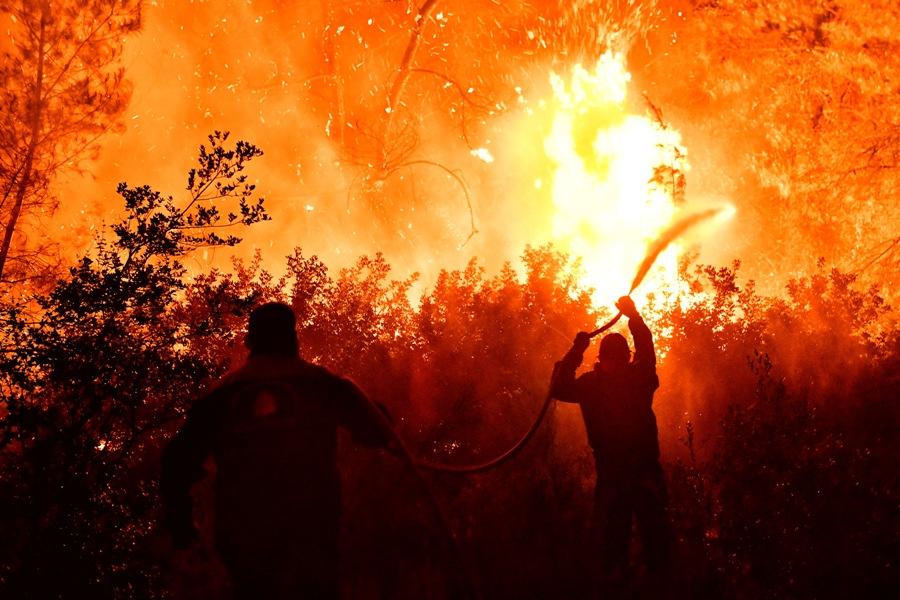Πυρκαγιά στον Σχίνο: Εκκενώνονται οικισμοί από το Δερβένι έως τον Πευκενέα μετά από αναζωπύρωση – ΒΙΝΤΕΟ