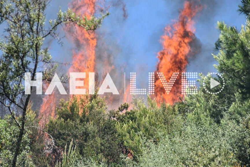 Πυρκαγιά σε δασική έκταση στον Πύργο – Επιχειρούν ισχυρές δυνάμεις της Πυροσβεστικής