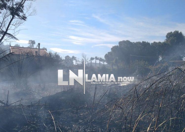 Φωτιά στην Τραγάνα Φθιώτιδας – Πλησιάζει σπίτια – Συναγερμός στην Πυροσβεστική/ ΒΙΝΤΕΟ