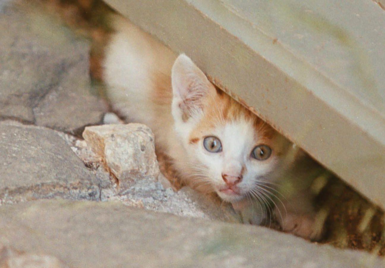 Βόλος: Στο εδώλιο 88χρονος που σκότωσε γάτα και την πέταξε στα σκουπίδια – Γιατί θα πληρώσει 30.000 ευρώ