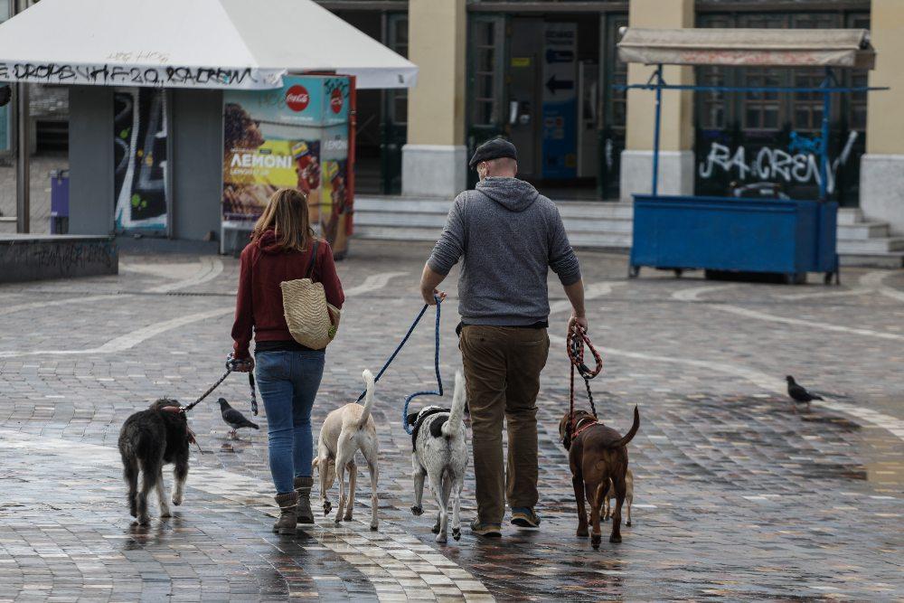 βόλτα με σκύλους