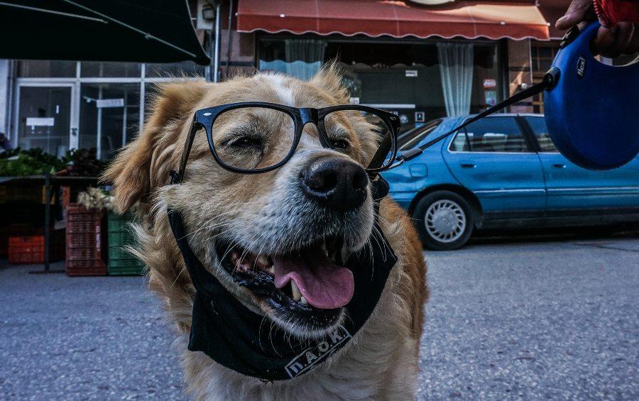 Μπορείς να αφήσεις την περιουσία στον σκύλο σου;