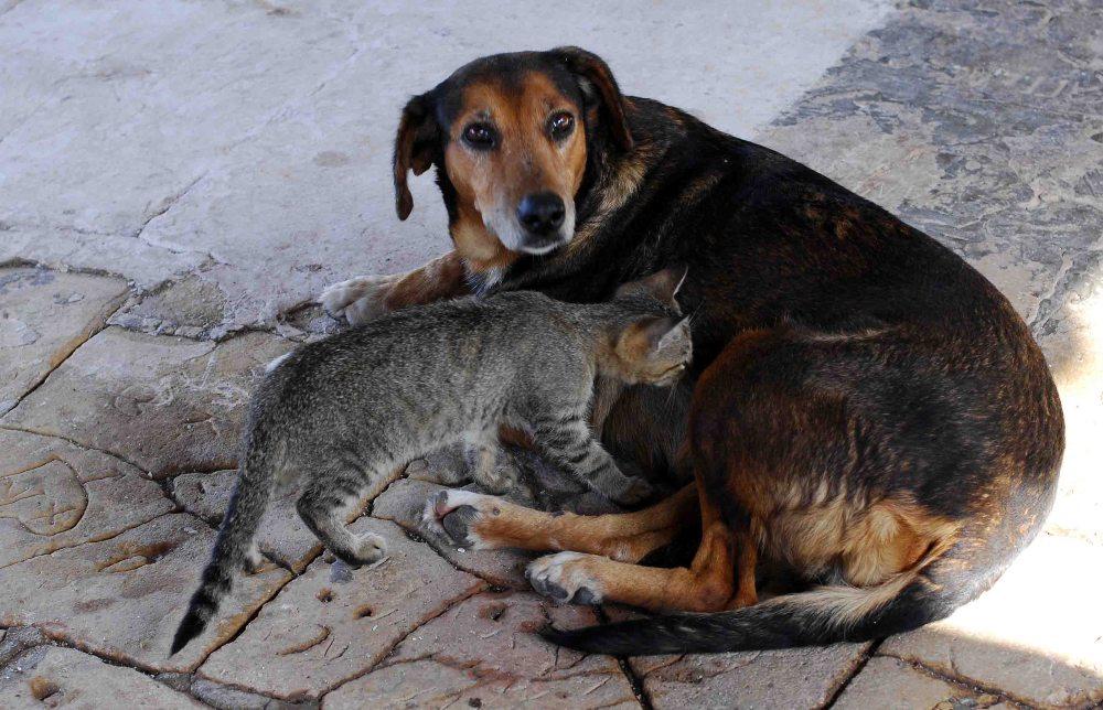 Κακοποίηση ζώων: Μνημόνιο συνεργασίας ΠΡΟΠΟ - Πανεπ. Θεσσαλίας