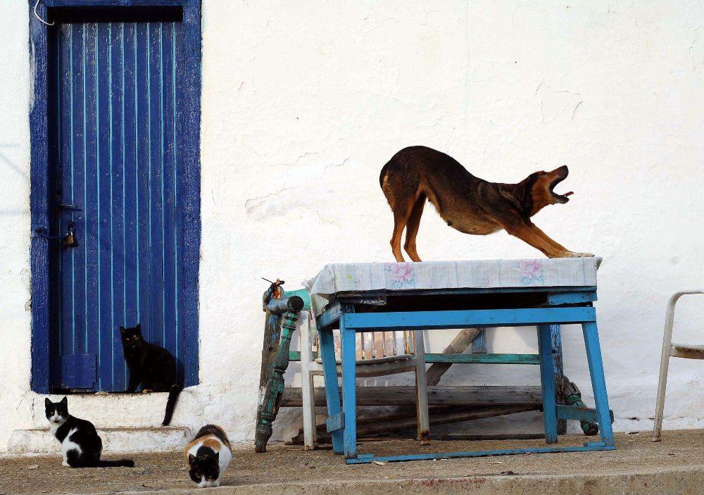 σκυλος και γάτα 3