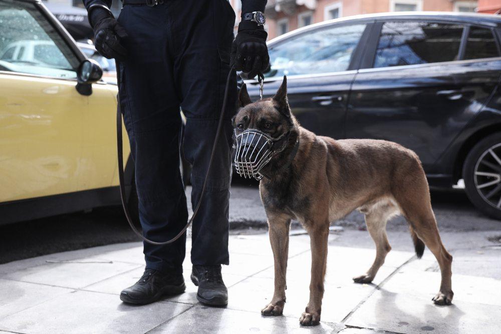 Σκύλοι ανιχνευτές σταμάτησαν 2 παράνομες μεταφορές χρημάτων ύψους 170.000 ευρώ