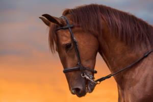 κακοποίηση αλόγου
