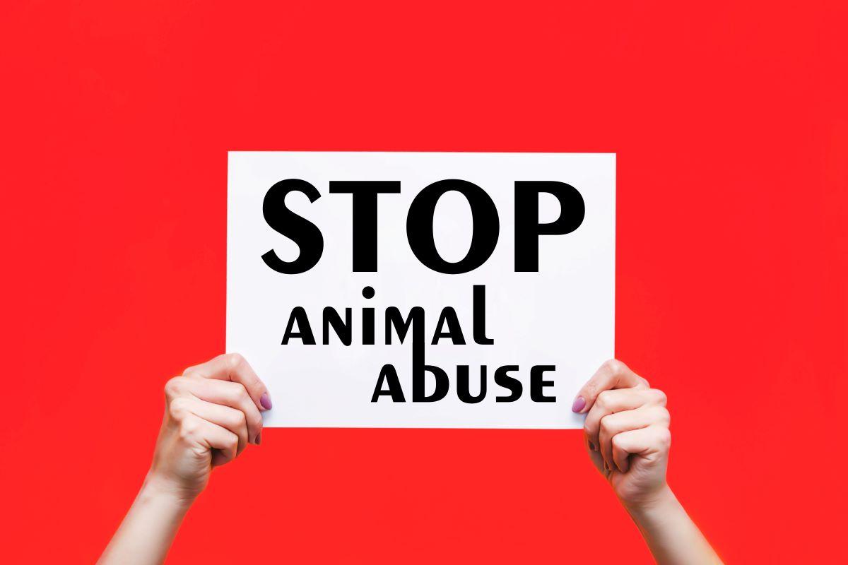 Η προφυλάκιση για τη σφαγή της γάτας - Nέο ποινολόγιο για κακοποίηση