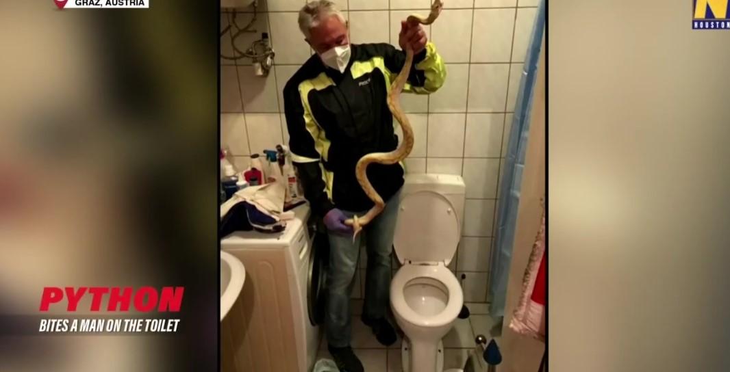 Εφιάλτης – Τον δάγκωσε πύθωνας που βγήκε από την λεκάνη της τουαλέτας – BINTEO
