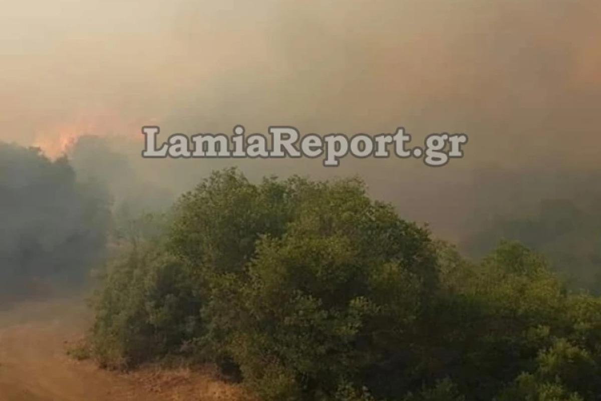 Φωτιά στη Φθιώτιδα: Ανεξέλεγκτη η φωτιά στο Λογγίτσι – Δύσκολη νύχτα λόγω των ανέμων – ΦΩΤΟ