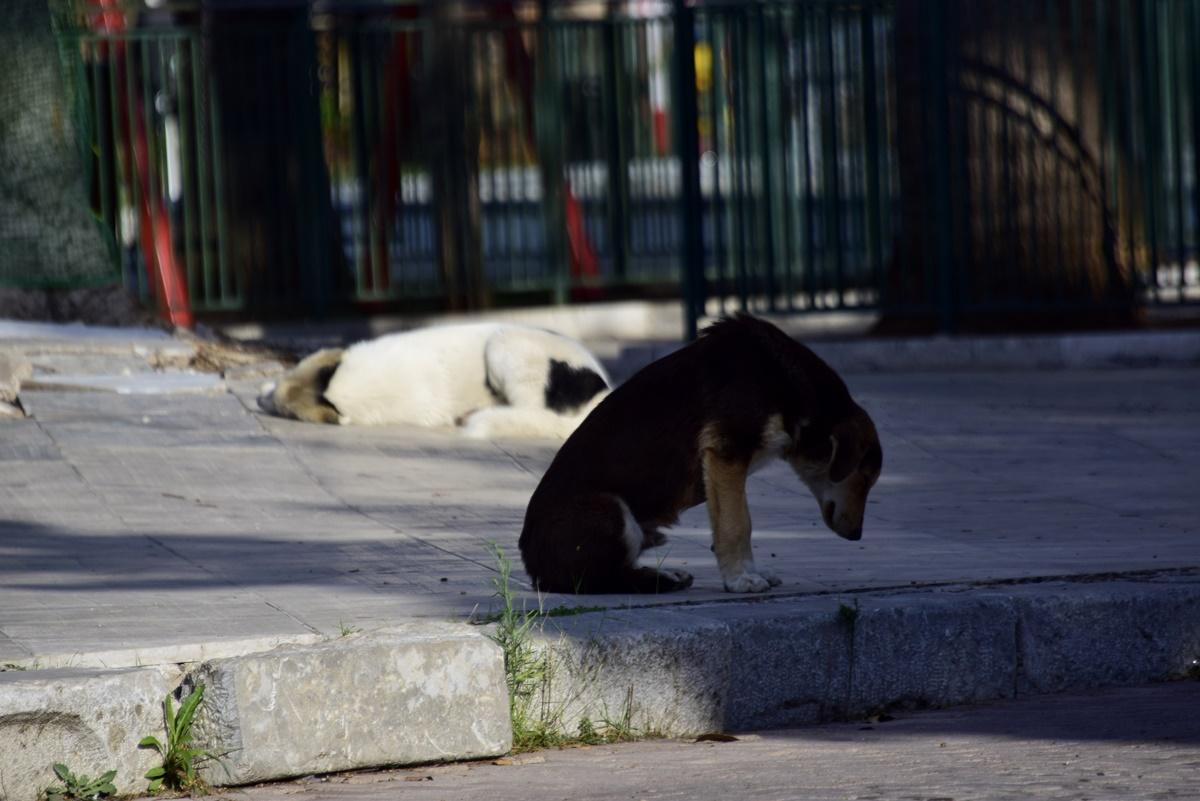 Κιλκίς: Πυροβόλησε και σκότωσε σκύλο σε πλατεία χωριού