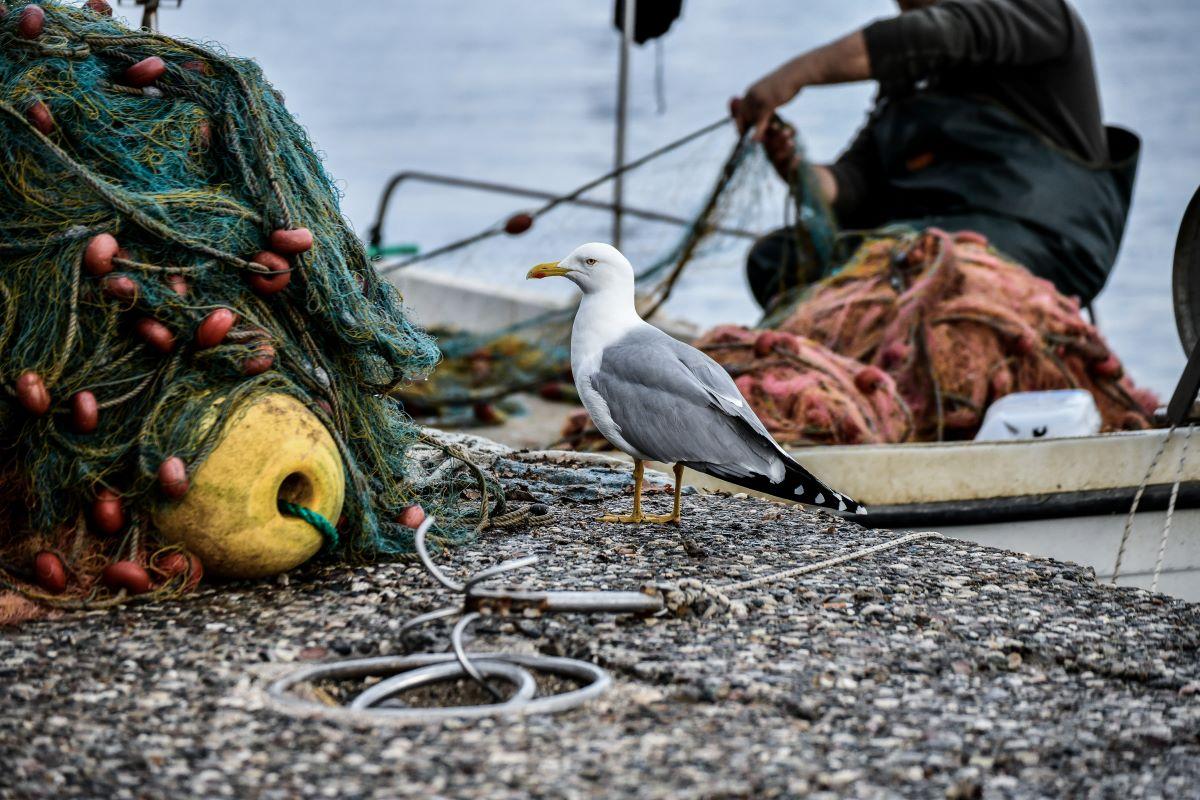 Θρίλερ στο Μεσολόγγι: Ψαράς εντόπισε ολόκληρο σκελετό μέσα στο νερό